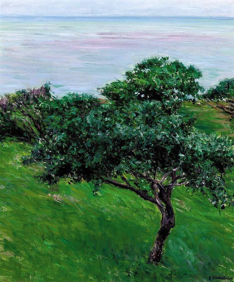 Gustave Caillebotte, 7IE-1882-15, pommiers. Maybe: 1880, CR161/173, Apple Trees on edge of Sea, Trouville, 65x55, A2008/06/25 (iR2;iR11;R2,p394;R101,no161;R102,no173+p283;R90II,p202)