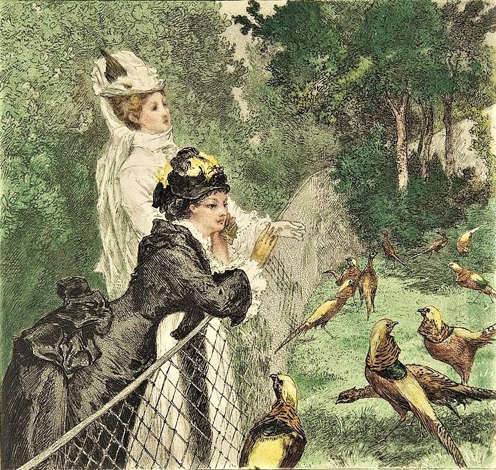Félix Bracquemond, 4IE-1879-3, Au jardin d'acclimatation. Now: 1873, (Beraldi 214), Au Jardin d'Acclimation, etch colour, 21x22, Metropolitan (iR6;R73,p47;R2,p266;R90II,p121)