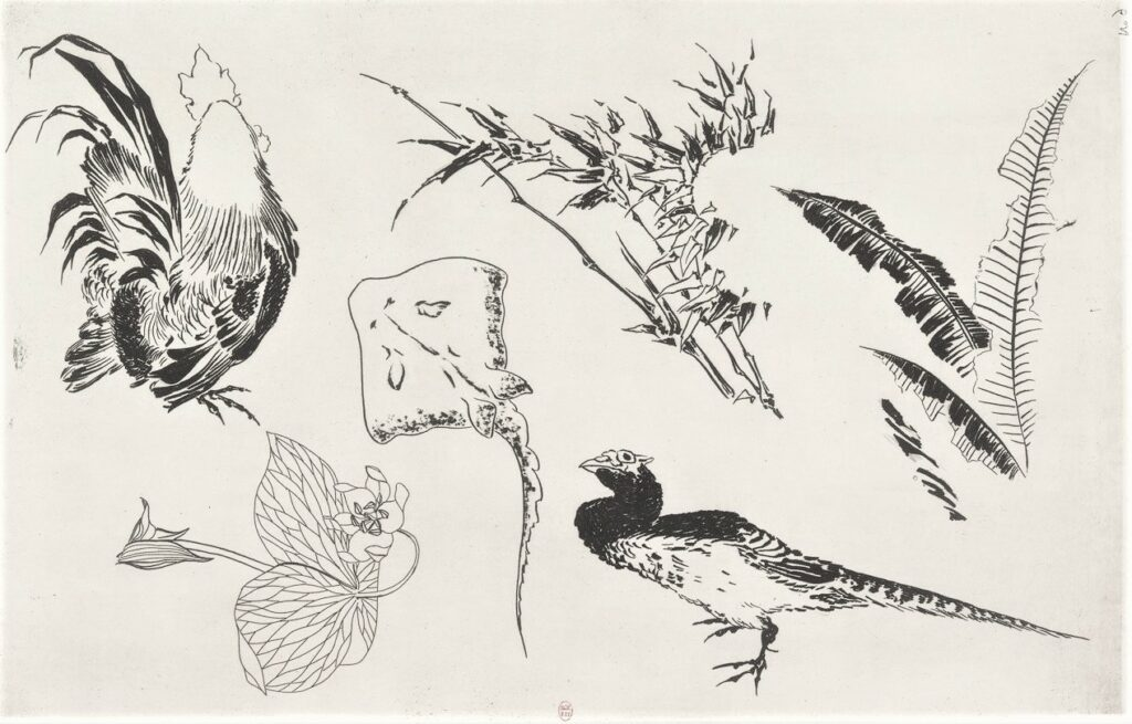 Félix Bracquemond, 5IE-1880-5, Eaux-fortes pour décoration... Probably: 1866, B538, Rousseau no.9, Rooster, pheasant, stingray, plants, etch, 28x43, BNF Paris (iR40;R73,p13)