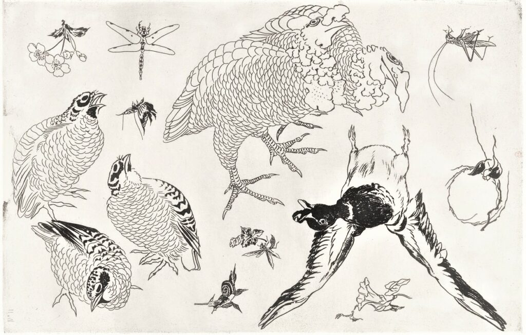 Félix Bracquemond, 5IE-1880-5, Eaux-fortes pour décoration... Probably: 1866, B540, Rousseau no.11, Duck with extended wings, quails, butterfly, dragonfly, snail, grasshopper, flowers, etch, 42x28, BNF Paris (iR40)
