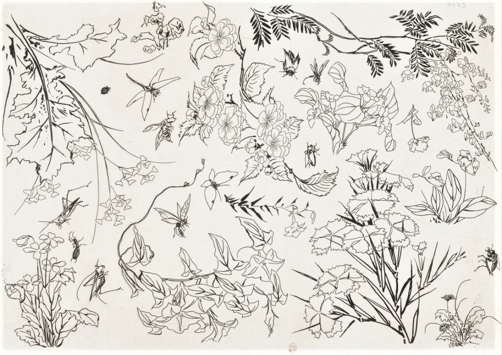 Félix Bracquemond, 5IE-1880-5, Eaux-fortes pour décoration... Probably: 1866, B552, Rousseau no.23, flowers and insects, etch, 25x35, BNF Paris (iR40)