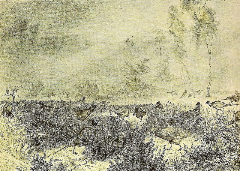 Félix Bracquemond, 1882, B779, Morning mist (with pheasants), etch, 24x35, xx (iR10;R88;R85,no779)