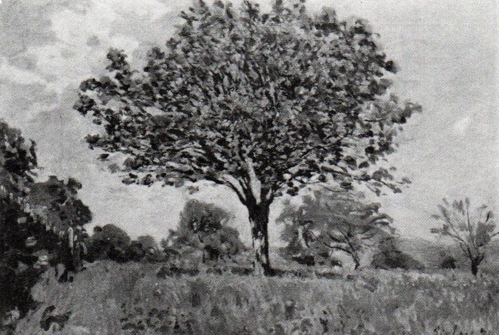 Alfred Sisley, 1IE-1874-164, Le Verger =1873, CR82, Le Verger, 50x73, private Paris (R90II,p29+13;R87,p254;R2,p123;R129,CR82)